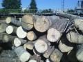 ГПУ провела 30 одновременных обысков в лесхозпредприятиях