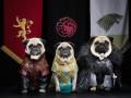 Мопсы Вестероса: Игры престолов воссоздали мопсы (фото)