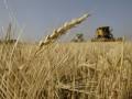 США повысили прогноз урожая зерна в Украине