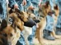 В Южной Корее будут клонировать собак для кинологов
