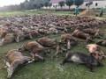 В Португалии охотники убили сотни животных и опубликовали их фото в Сети