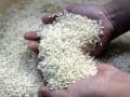 В японском рисе обнаружено повышенное содержание радиоактивного цезия