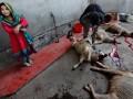 Мусульмане Украины в Курбан-байрам поделятся с беженцами мясом ягнят