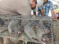 Камбоджа наращивает экспорт мяса