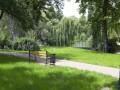 Медведчук встал на защиту деревьев и кустарников