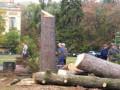 В Киеве возле 1-го корпуса КПИ спилили вековые ели
