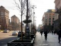В центре Киева высадили экспериментальные деревья