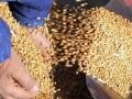 Украина сократила экспорт сельхозтоваров в ЕС