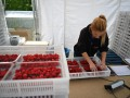 В Германии вспышка COVID-19: заболели украинцы