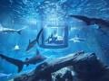 В Париже появилась возможность провести ночь с акулами