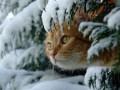 Погода на начало недели: Сильного снега не будет, но похолодает