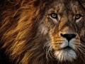 В Мексике лев сбежал с ранчо и загрыз человека