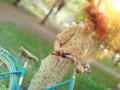 В Киев придет тепло и бабье лето