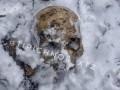 На остановке троллейбуса в Харькове нашли скелет