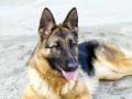 В Харькове мужчина заказал убийство своей собаки