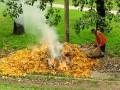 В Киеве будут штрафовать за сжигание листьев