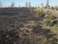 Под Житомиром сожгли Парк памяти героев АТО