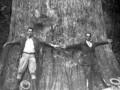 В США в возрасте 3,5 тыс лет сгорел старейший в мире кипарис