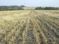В Кабмине готовятся разрешить продажу земли, придумывая специальные ограничения