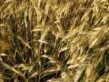 Крупнейший украинский аграрный холдинг добился продления кредита на $222 млн