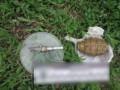 В военной части на Закарпатье погиб военнослужащий