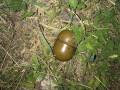 Мэр Конотопа нашел гранаты в багажнике машины