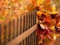 Какие праздники 15 октября 2020: факты, традиции, что нельзя делать