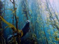 Чудеса подводного мира: 10 победителей конкурса фотографий