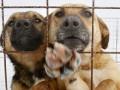 В Киеве директора приюта для животных подозревают в присвоении более 60 тыс грн
