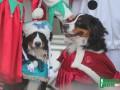 В Кременчуге провели новогодний собачий парад
