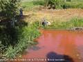 Дохлая рыба и запах ацетона: Под Киевом река Стугна оказалась загрязнена
