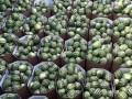 В Запорожье изъяли тонну опасных арбузов