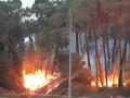 Во Франции за ночь сгорели 165 гектаров леса
