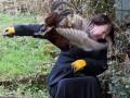 Чистое зло: Агрессивный фазан не дает жизни британцам (ВИДЕО)