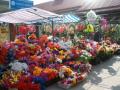 Поминальные дни: в Днепре борются с токсичными цветами