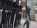 В Шотландии пингвину присвоили чин генерала Королевской гвардии