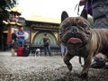 В Китае начали преподавать йогу для собак и их хозяев
