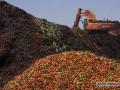 Россия уничтожила тонны импортных продуктов