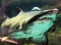 Эколог: Акула в столичном ТРЦ, возможно, доживает последние дни