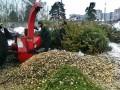 В Киеве уже открыли пункт приема новогодних елок