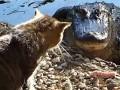 Одесский зоопарк: Мы не кормим крокодилов кошками