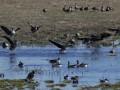 Миллион животных и растений находится под угрозой исчезновения - ООН
