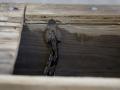 В США мужчина погиб от яда спасенной им змеи