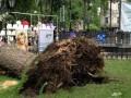 В Одесской области ураган повалил около трех тысяч деревьев