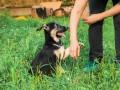 Под Киевом построят огромный приют для животных за 150 млн грн