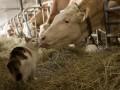 Украина и Беларусь создадут совместный банк ДНК животных