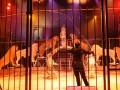 В Украине запретят использовать животных в цирках