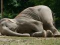 Названа причина массовой гибели слонов в Африке