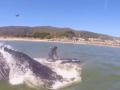 Серфингистка в Калифорнии столкнулась с китом