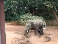 В Индии слон травмировал трех человек